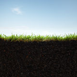 Grass and soil. Cross section of grass and soil against blue sky Stock Image
