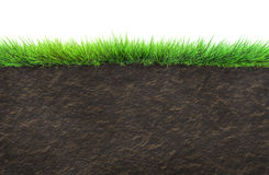 Grass and soil. Isolated on white royalty free stock image