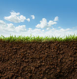 Grass and soil. Cross section of grass and soil against blue sky royalty free stock photography