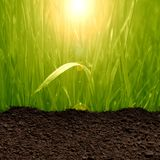 Grass and soil Royalty Free Stock Image