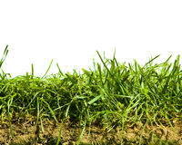 Grass and Soil Isolated royalty free stock photography
