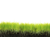 Grass with soil Royalty Free Stock Image