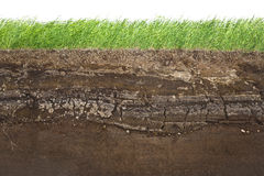 Grass and soil layers isolated on white. Cross section of green grass and underground soil layers beneath stock photo