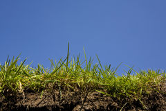 Grass-soil and root Stock Photography
