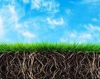 Grass and soil Stock Photos