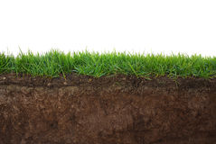 Grass and soil. From undeground perspective stock image