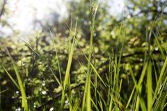 Grass. Some green grass texture in summer Stock Photos