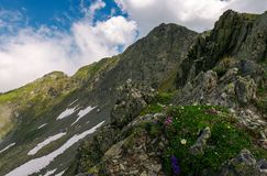Grass and some purple flowers on a rocky cliff. S of Fagaras mountains in Romania. beautiful summer weather with clouds on a blue sky stock photos