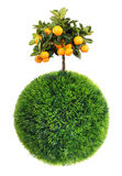 Grass sphere and tree Stock Photos