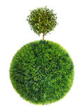 Grass sphere and tree Royalty Free Stock Image