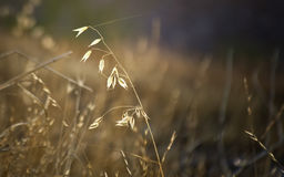 Grass and spider web strand in morning sun. Stock Photos