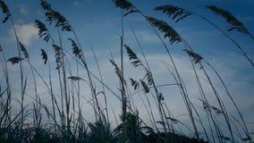 Grass spikes stock video