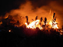 Grass spikes in front of burning flame at night Stock Photo
