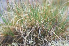 Grass with spirals. Vine, circle, macro growth stock photography