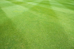 Grass of sport field Stock Image