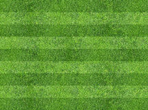 Grass of sport field Royalty Free Stock Images