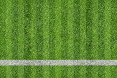 Grass of sport field Royalty Free Stock Photo