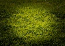 Grass spotlight Royalty Free Stock Image