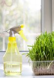 Grass and sprayer indoors Royalty Free Stock Photo