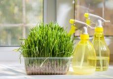 Grass and sprayer indoors Stock Photos