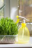 Grass and sprayer indoors Stock Image