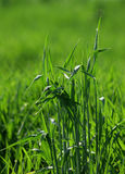 Grass spreads 2. Grass spreads in field Royalty Free Stock Photos