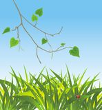 Grass and sprig of birch. Spring composition. Illustration Stock Image