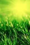 Grass in spring Stock Photos