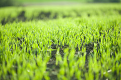 Grass on spring field Stock Photography