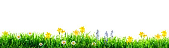 Grass and spring flowers background. Grass and spring flowers isolated stock photo