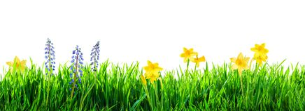 Grass and spring flowers background royalty free stock photography