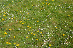 Grass with spring flowers Stock Photo