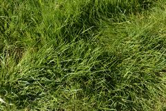 Grass. Spring green grass on the french field Royalty Free Stock Photography