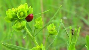 Grass stock video footage