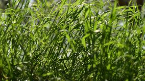 Grass in spring video Royalty Free Stock Images