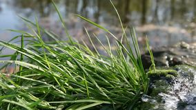 Grass sprinkled with spring water Stock Photo