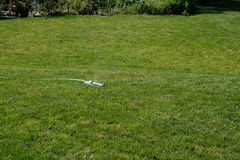Grass and sprinkler Stock Images
