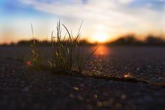 Grass sprout Stock Photos