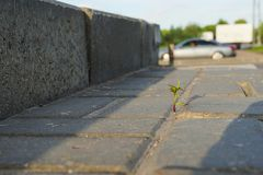 Grass sprout makes its way through asphalt. A young shoot breaks through the concrete. The life force of the plant royalty free stock photos