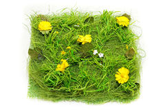Grass square Stock Photography