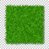 Grass square 3D. Beautiful green grassy field, isolated on white transparent background. Lawn abstract nature texture. Symbol natural, fresh, meadow plant Stock Photos