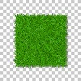 Grass square 3D. Beautiful green grassy field,  on white transparent background. Lawn abstract nature texture. Symbol natural, fresh, meadow plant, spring or Royalty Free Stock Image