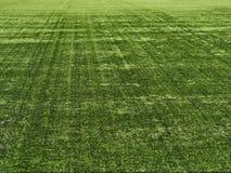 Grass at the stadium. Stock Photo