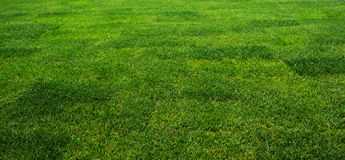 The grass at the stadium. Stock Photography