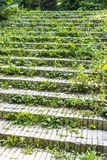 Grass on stairs Stock Images