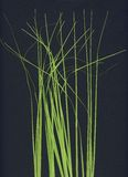 Grass stalks Stock Photos