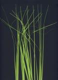 Grass stalks. Light green grass stalks made of plastic Stock Photos