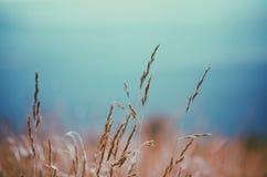 Grass Stalks Background Texture Stock Image