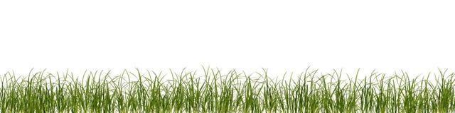 Grass stalks lawn framing decoration vector illustration