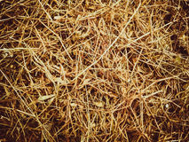 Grass. This grass stay in the sun Stock Photography